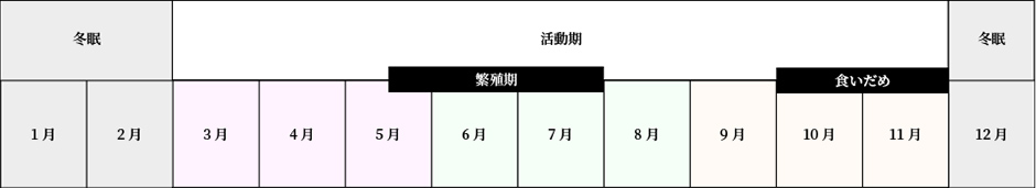 ヒグマの行動年間表。12月から2月は冬眠期。3月から11月は活動期で、そのうち5月中旬から7月末までは繁殖期、10月頭から11月末までは食いだめ期。