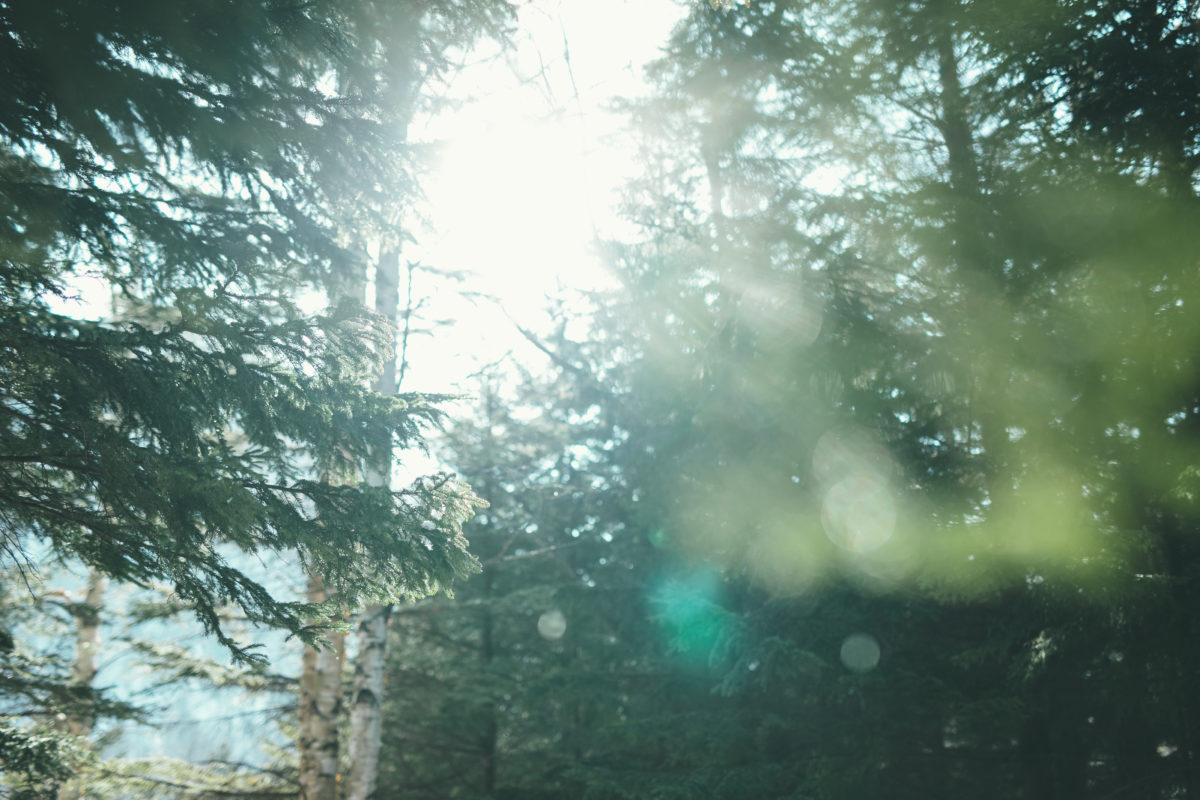 冬の森で、知らない光を見つけた。の画像