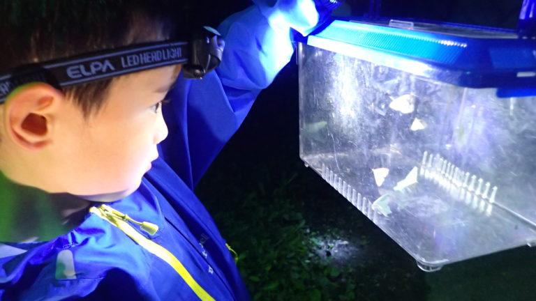昆虫博士キャンプのイメージ写真