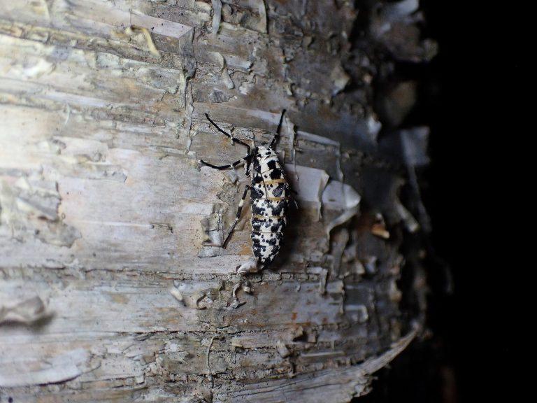 昆虫博士キャンプ(夜の回)のイメージ写真